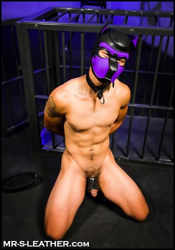 gay pup slave